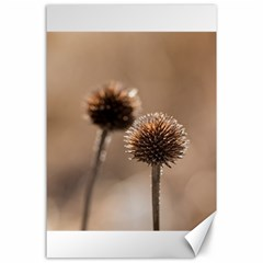 Withered Globe Thistle In Autumn Macro Canvas 24  x 36