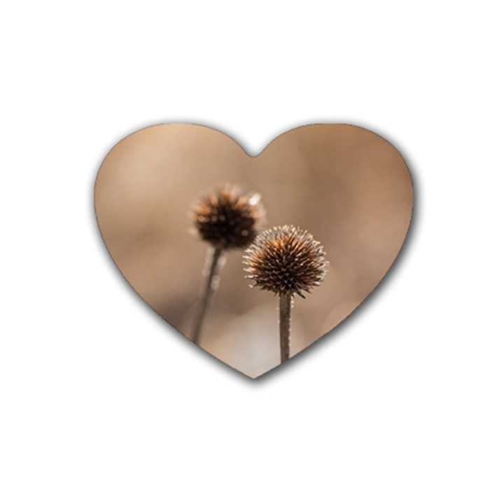 Withered Globe Thistle In Autumn Macro Heart Coaster (4 pack)