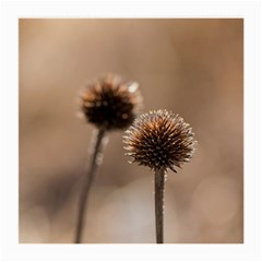 Withered Globe Thistle In Autumn Macro Medium Glasses Cloth (2 Side) by wsfcow
