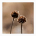 Withered Globe Thistle In Autumn Macro Medium Glasses Cloth (2-Side) Front