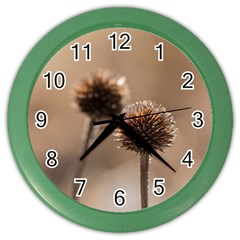 Withered Globe Thistle In Autumn Macro Color Wall Clocks