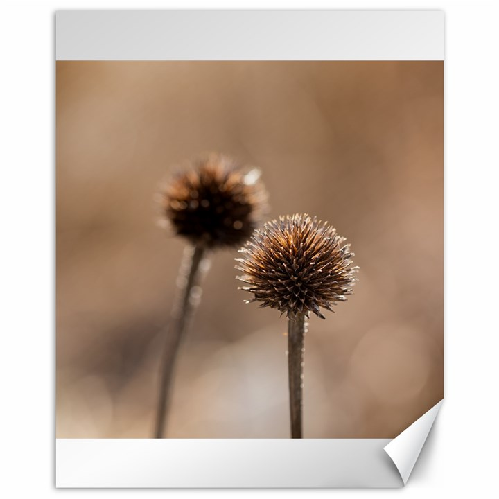 Withered Globe Thistle In Autumn Macro Canvas 11  x 14