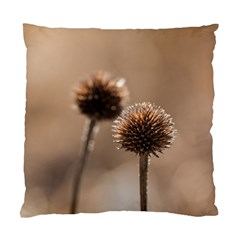 Withered Globe Thistle In Autumn Macro Standard Cushion Case (one Side) by wsfcow