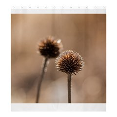 Withered Globe Thistle In Autumn Macro Shower Curtain 66  X 72  (large)  by wsfcow