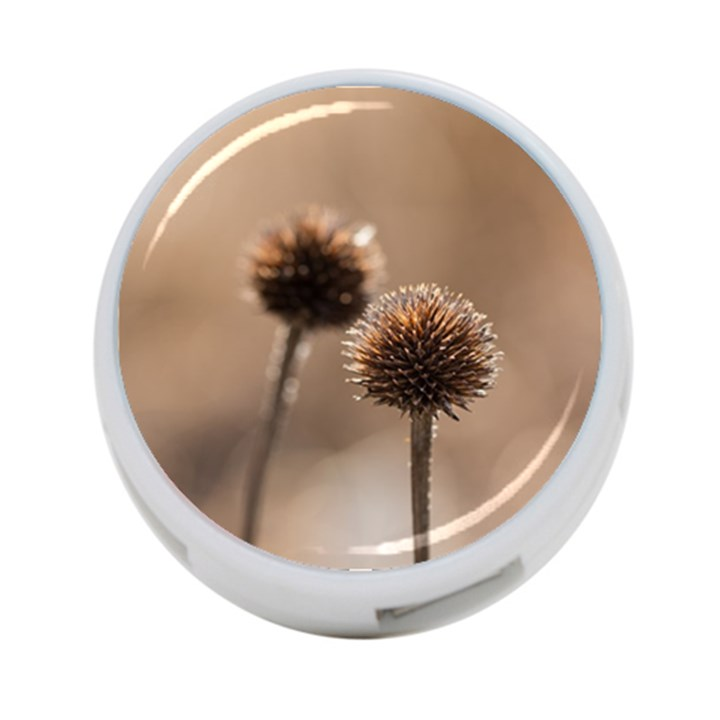 Withered Globe Thistle In Autumn Macro 4-Port USB Hub (Two Sides)
