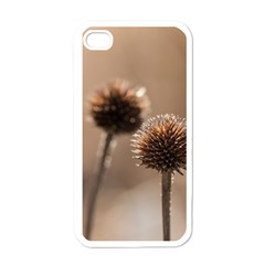 Withered Globe Thistle In Autumn Macro Apple Iphone 4 Case (white) by wsfcow
