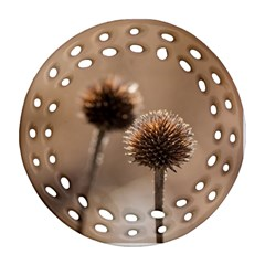 Withered Globe Thistle In Autumn Macro Round Filigree Ornament (2side) by wsfcow