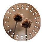 Withered Globe Thistle In Autumn Macro Round Filigree Ornament (2Side) Front