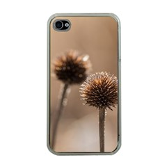 Withered Globe Thistle In Autumn Macro Apple Iphone 4 Case (clear) by wsfcow