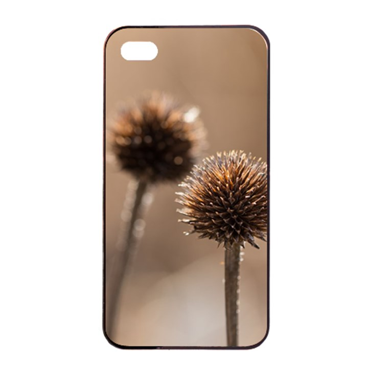 Withered Globe Thistle In Autumn Macro Apple iPhone 4/4s Seamless Case (Black)