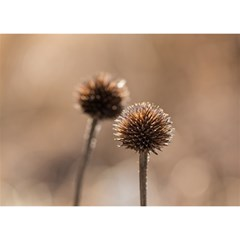Withered Globe Thistle In Autumn Macro Birthday Cake 3d Greeting Card (7x5) by wsfcow