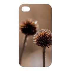 Withered Globe Thistle In Autumn Macro Apple Iphone 4/4s Hardshell Case by wsfcow