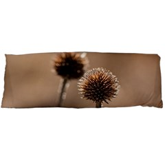 Withered Globe Thistle In Autumn Macro Body Pillow Case (dakimakura) by wsfcow