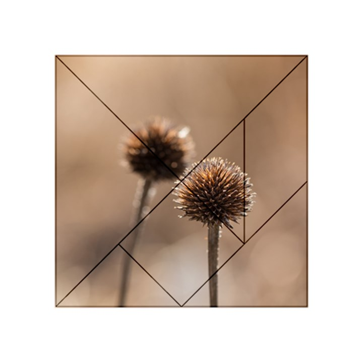Withered Globe Thistle In Autumn Macro Acrylic Tangram Puzzle (4  x 4 )