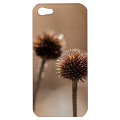 Withered Globe Thistle In Autumn Macro Apple Iphone 5 Hardshell Case by wsfcow