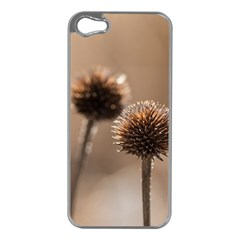 Withered Globe Thistle In Autumn Macro Apple Iphone 5 Case (silver) by wsfcow