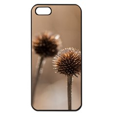 Withered Globe Thistle In Autumn Macro Apple Iphone 5 Seamless Case (black)
