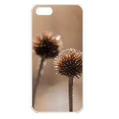 Withered Globe Thistle In Autumn Macro Apple Iphone 5 Seamless Case (white)