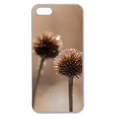 Withered Globe Thistle In Autumn Macro Apple Seamless Iphone 5 Case (clear)