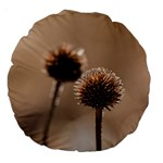 Withered Globe Thistle In Autumn Macro Large 18  Premium Round Cushions