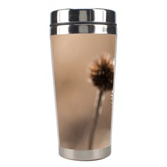 Withered Globe Thistle In Autumn Macro Stainless Steel Travel Tumblers by wsfcow