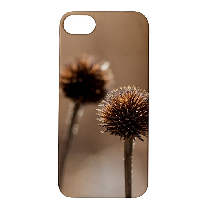 Withered Globe Thistle In Autumn Macro Apple iPhone 5S/ SE Hardshell Case