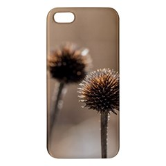 Withered Globe Thistle In Autumn Macro Iphone 5s/ Se Premium Hardshell Case