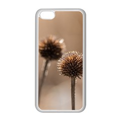 Withered Globe Thistle In Autumn Macro Apple Iphone 5c Seamless Case (white) by wsfcow