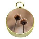 Withered Globe Thistle In Autumn Macro Gold Compasses