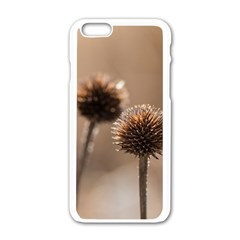 Withered Globe Thistle In Autumn Macro Apple Iphone 6/6s White Enamel Case by wsfcow