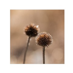 Withered Globe Thistle In Autumn Macro Small Satin Scarf (square)