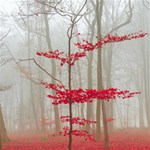 Magic forest in red and white Happy Birthday 3D Greeting Card (8x4) Inside