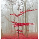 Magic Forest In Red And White Storage Stool 12   Top