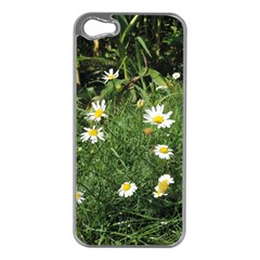 White Daisy Flowers Apple Iphone 5 Case (silver) by picsaspassion