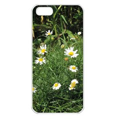 White Daisy Flowers Apple Iphone 5 Seamless Case (white) by picsaspassion
