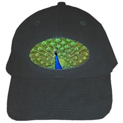 Bird Peacock Black Cap