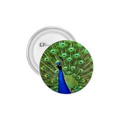Bird Peacock 1 75  Buttons