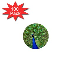 Bird Peacock 1  Mini Magnets (100 Pack)