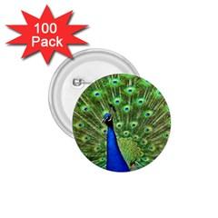 Bird Peacock 1 75  Buttons (100 Pack)