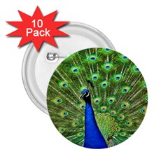 Bird Peacock 2 25  Buttons (10 Pack)