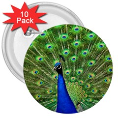 Bird Peacock 3  Buttons (10 Pack)