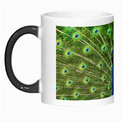 Bird Peacock Morph Mugs