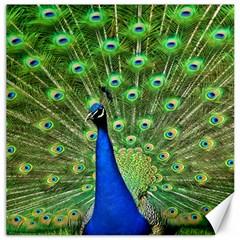 Bird Peacock Canvas 16  X 16