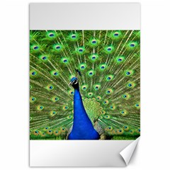 Bird Peacock Canvas 20  X 30