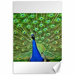 Bird Peacock Canvas 24  X 36