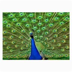 Bird Peacock Large Glasses Cloth
