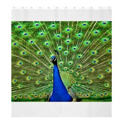 Bird Peacock Shower Curtain 66  X 72  (large)