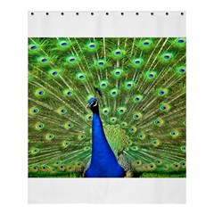Bird Peacock Shower Curtain 60  X 72  (medium)