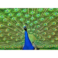 Bird Peacock Birthday Cake 3d Greeting Card (7x5)