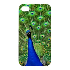 Bird Peacock Apple Iphone 4/4s Hardshell Case